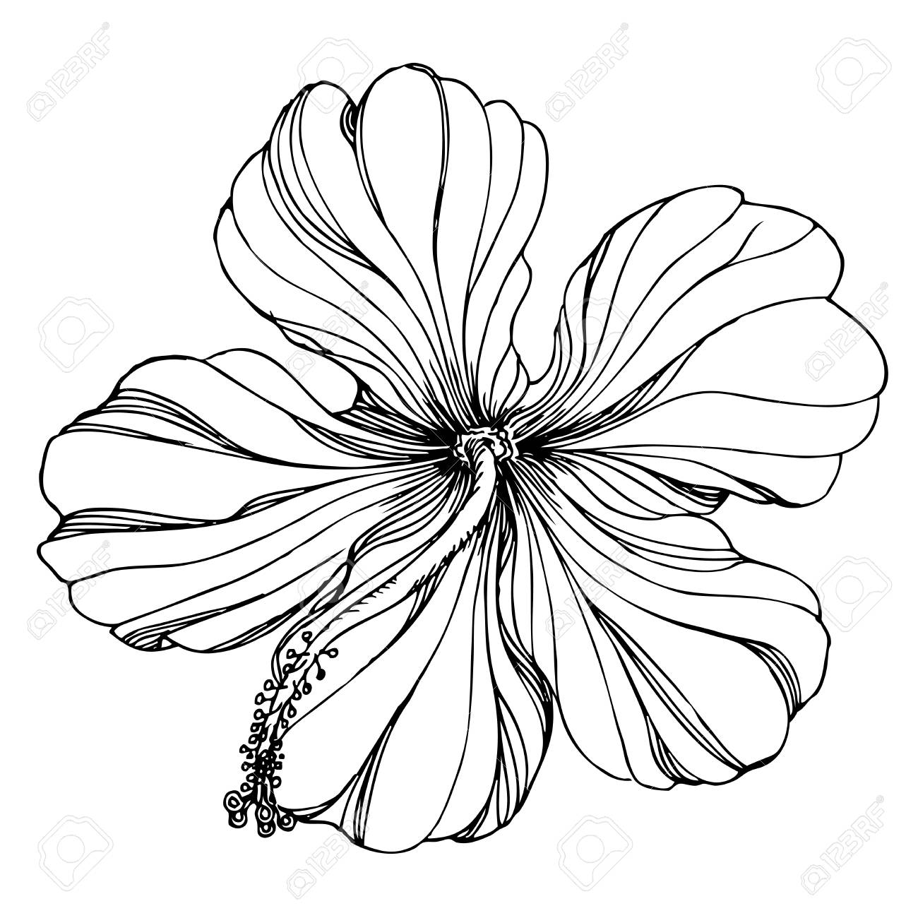Black and white Hand drawn floral ornament with hibiscus.