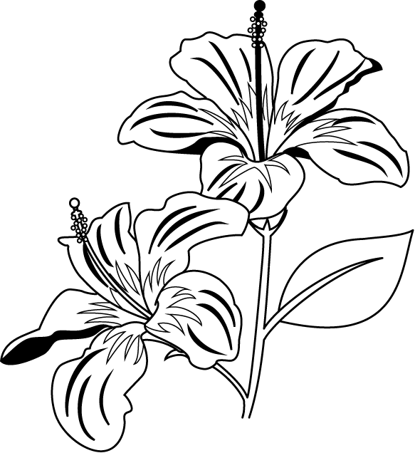 Black And White Hibiscus Clipart.