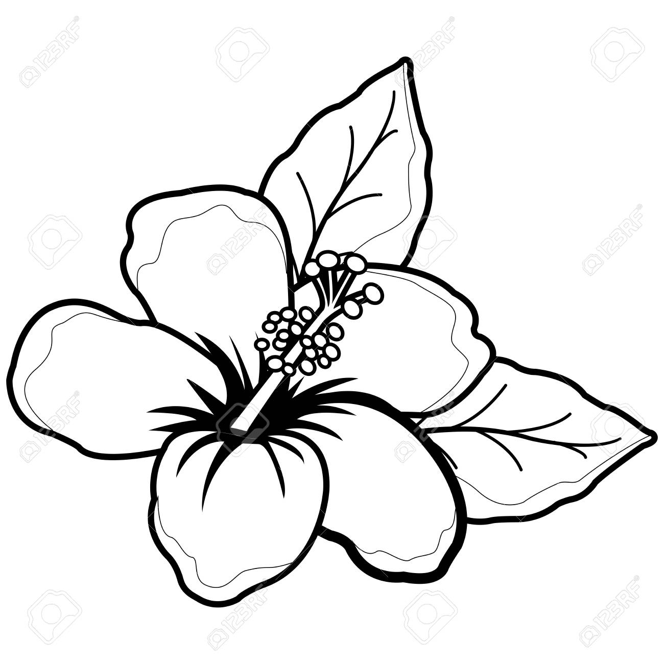Hawaiian hibiscus flower. Black and white coloring book page.