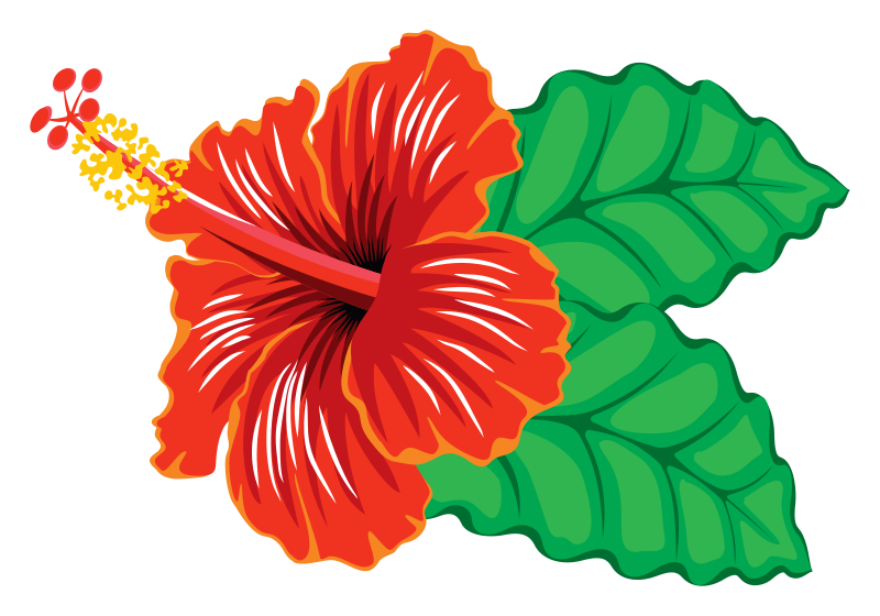 Free Hibiscus Flower Cliparts, Download Free Clip Art, Free.