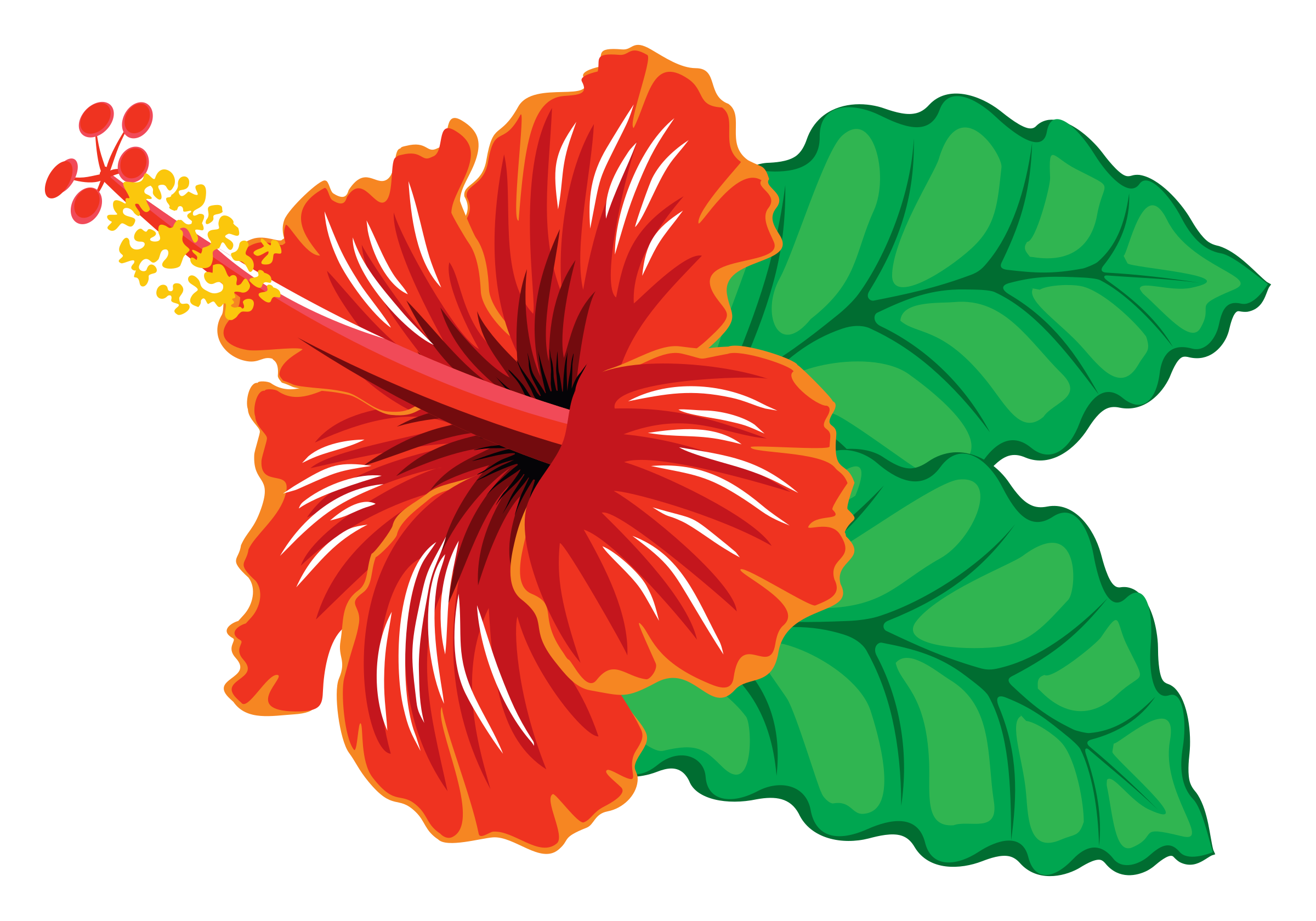 Hibiscus Flower Clipart Png.