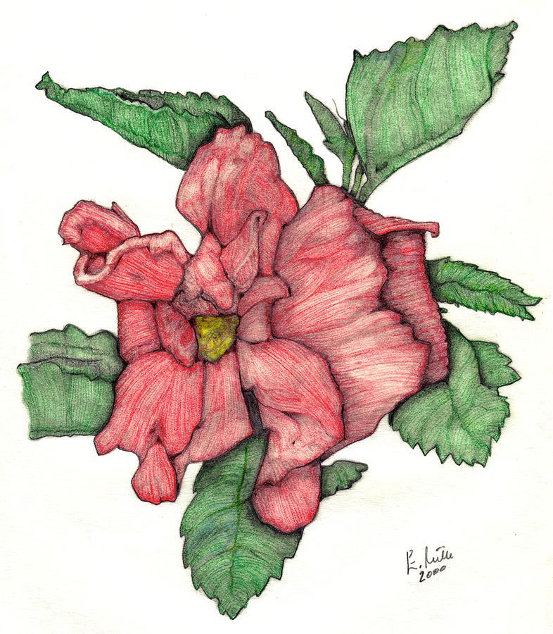 Picture Of Hibiscus Plant.