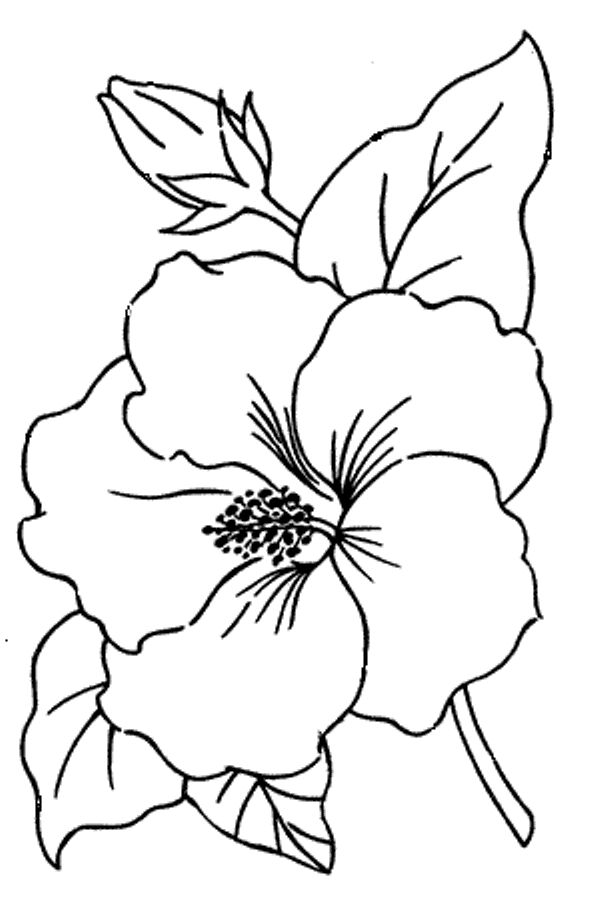 655 Hibiscus Flower free clipart.