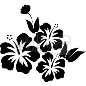 hibiscus drawing clipart. Royalty.