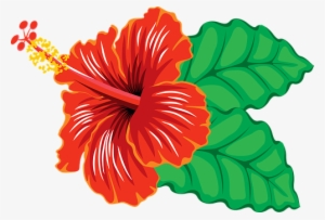 Hibiscus Flower PNG Images.