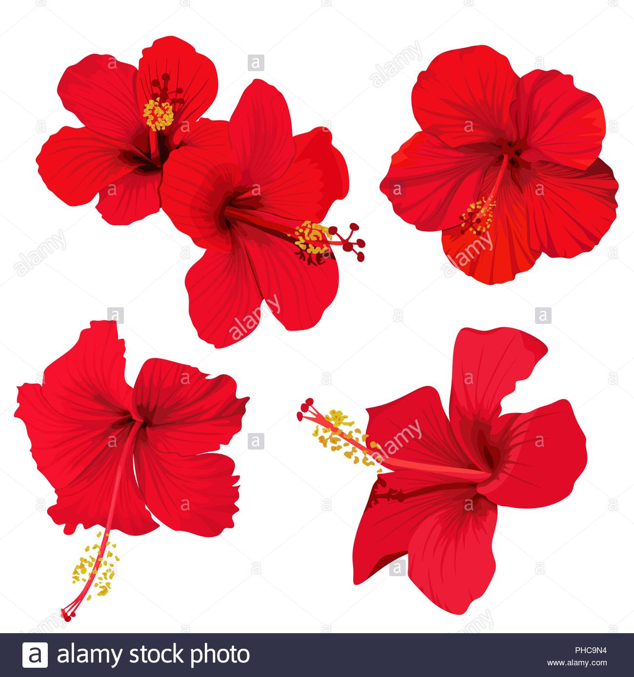 hibiscus flower vector clip art set red flowers tropical planrs.