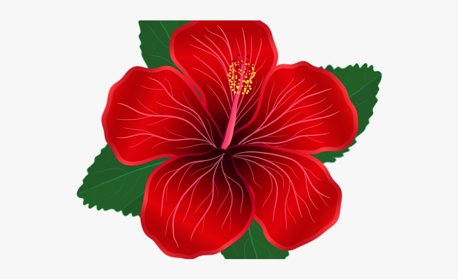 Hibiscus Clipart Shoeflower.