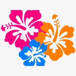 Hibiscus Clipart Bloom.