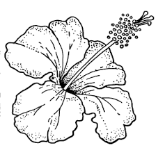 hibiscus flower drawing outline.