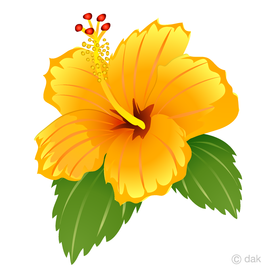 Free Yellow Hibiscus Clipart Image|Illustoon.