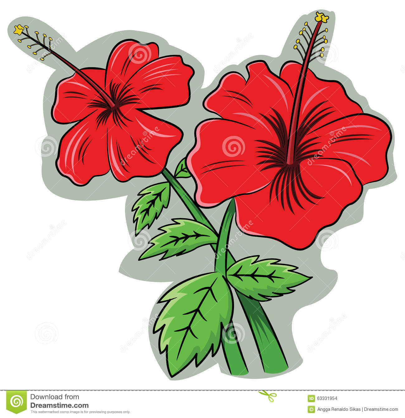 Bright Red Chaba Flower Hibiscus Rosa Sinensis Stock Illustrations.