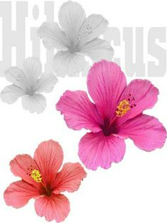Art clipart, The o'jays and Hibiscus on Pinterest.