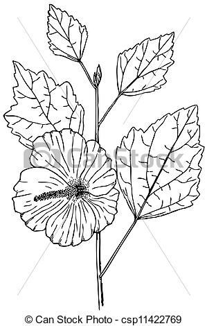 Clip Art Vector of Plant Hibiscus syriacus.