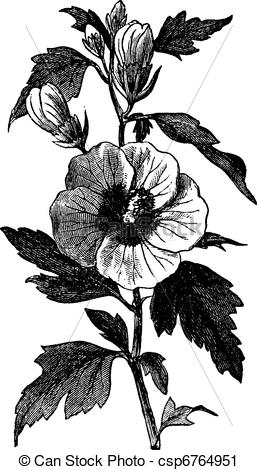 Vector Clip Art of Garden hibiscus (Hibiscus syriacus) or Shrub.