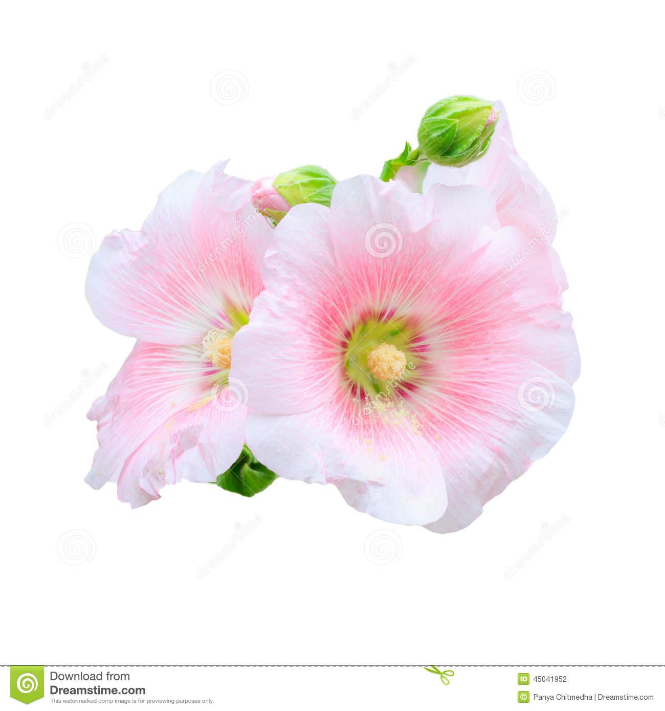 hibiscus flower black and white tattoo