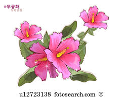 Hibiscus syriacus Illustrations and Clip Art. 13 hibiscus syriacus.