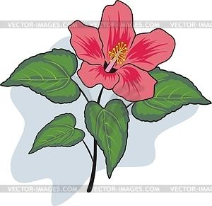 Clipart of hibiscus.