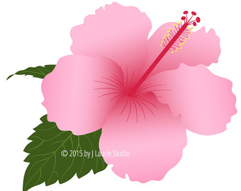 Hibiscus Tree Clipart 20 Free Cliparts Download Images On