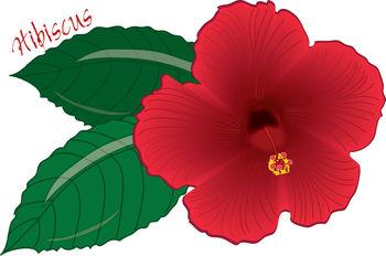 Free Hawaii Clipart.