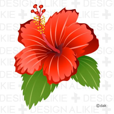 1000+ images about Hello Hibiscus on Pinterest.
