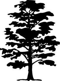 hickory tree drawing.