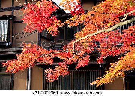 Stock Photograph of Japan, Hida, Takayama, autumn leaves,. z71.