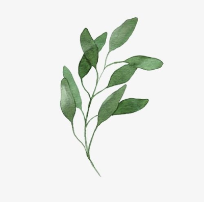 plant PNG and vectors for Free Download.