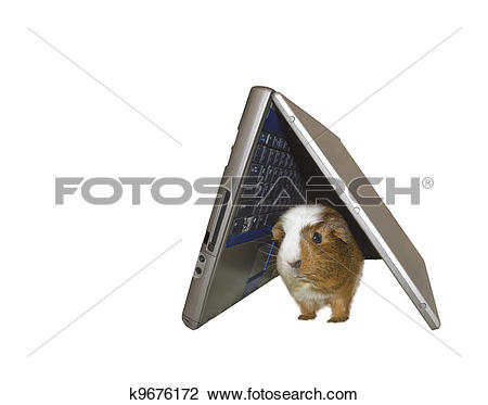 Stock Photo of Piggy hiding place; another use for a broken laptop.