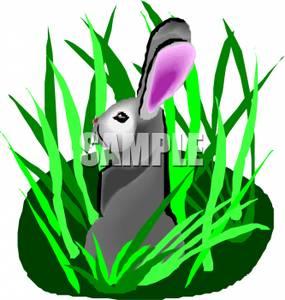 A Rabbit Hiding In the Grass.