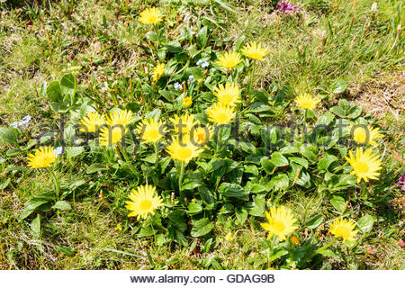 Alpinum Stock Photos & Alpinum Stock Images.