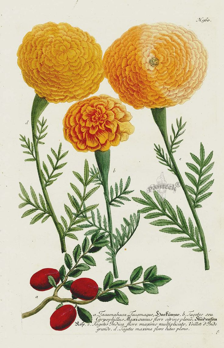 1000+ images about Floral Art on Pinterest.