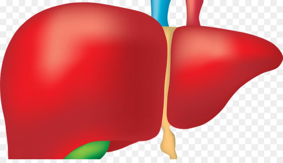 Liver clipart damaged liver, Liver damaged liver Transparent.