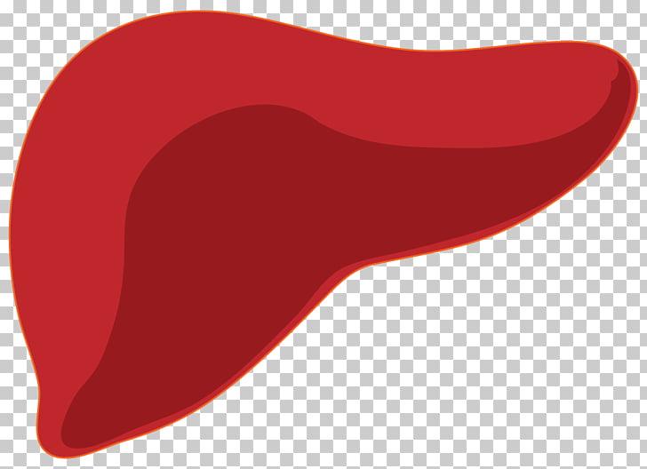 Organ Liver Glycogen Vitamin Homo sapiens, liver PNG clipart.