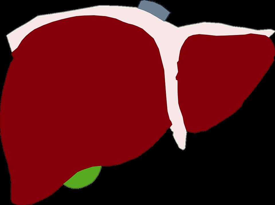 El Hígado Humano Rojo.