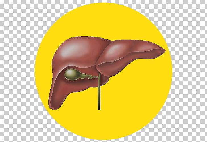Medicina naturopatía alcoholismo enfermedad hepatitis, hígado PNG.