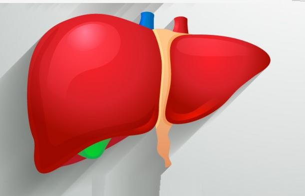 descuben una proteina protegería contra el hígado graso.