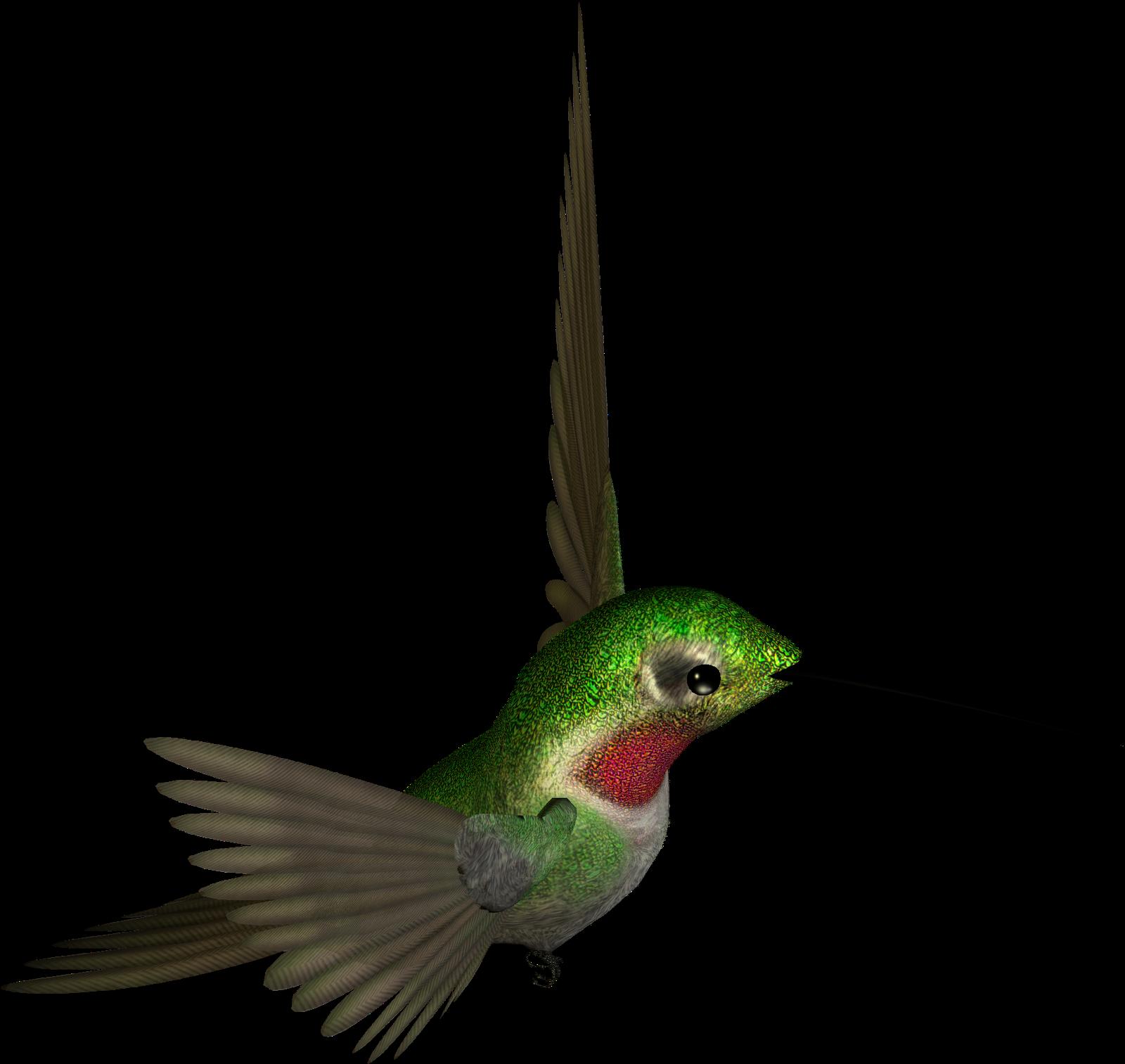 Humming Bird Clipart.