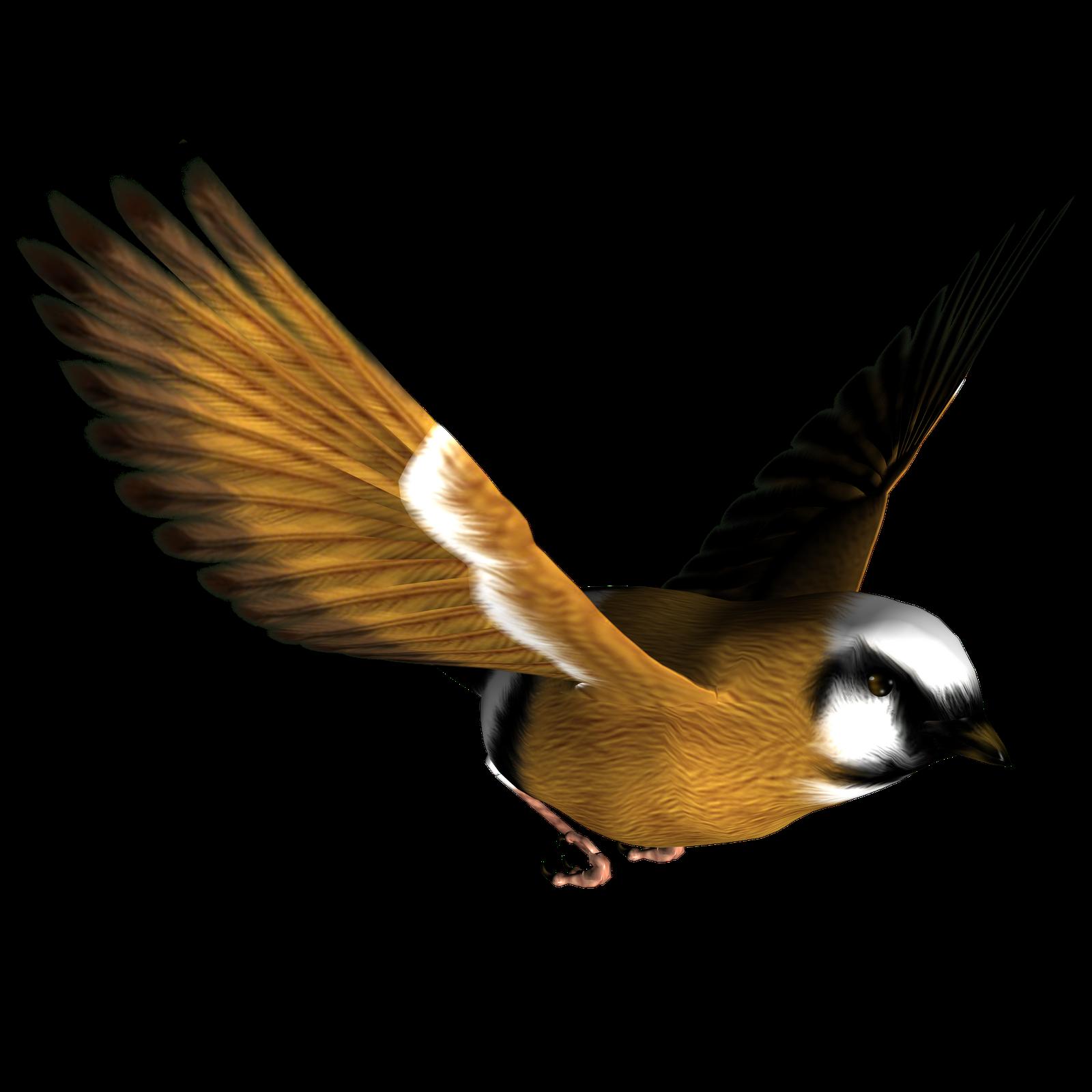 Bird Png.