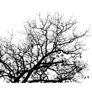 A high contrast bare tree in balck and white.