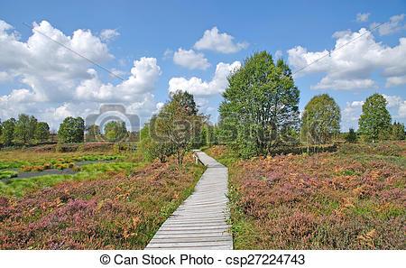 Stock Photo of High Fens,Eifel National Park.