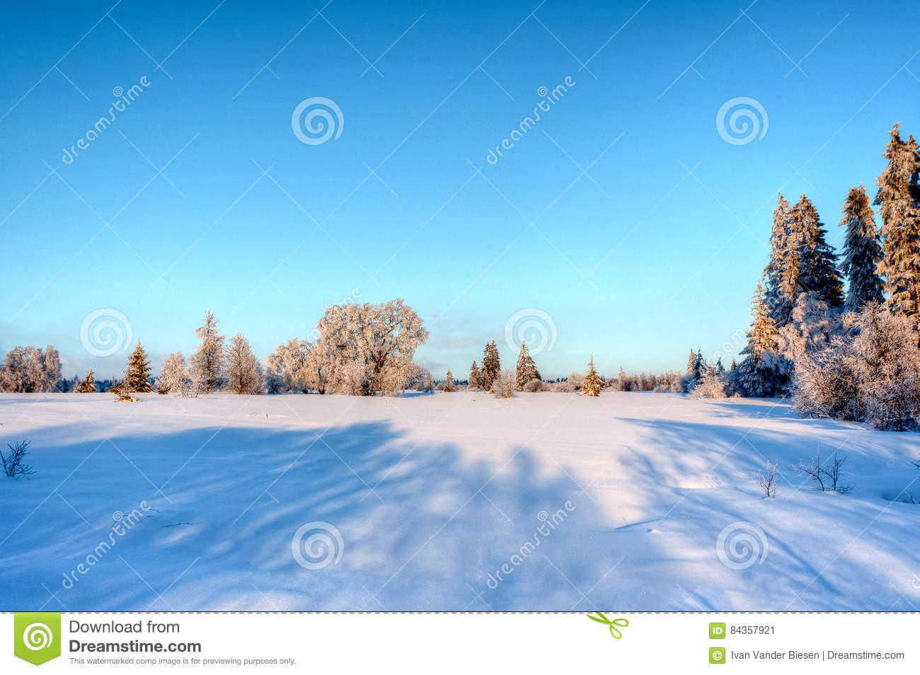 Winter Snow Landscape, High Fens, Belgium Stock Photo.