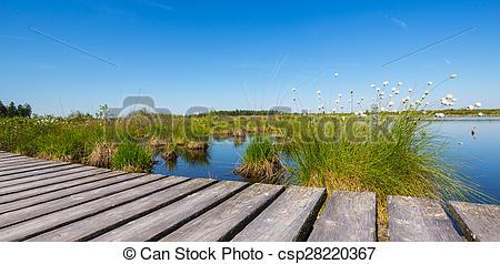Stock Image of High Fens (Hautes Fagnes) a bog landscape at summer.
