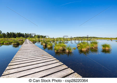 Stock Image of bog bond with wooden trail at the High Fens (Hautes.