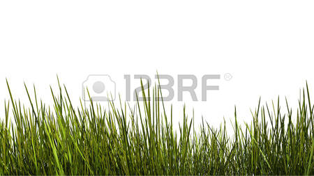 2,084 Tall Grass Stock Illustrations, Cliparts And Royalty Free.