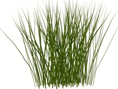 grass drawing.