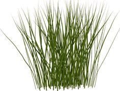 grass drawing.