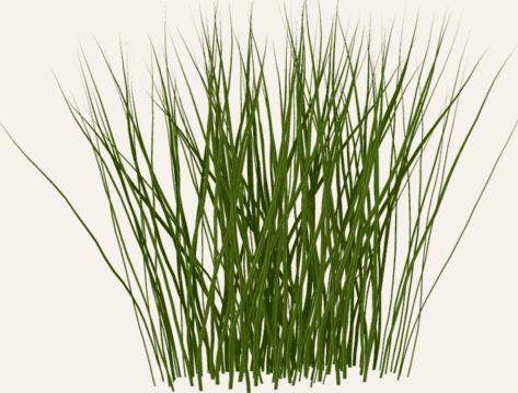 Tall grass clipart.