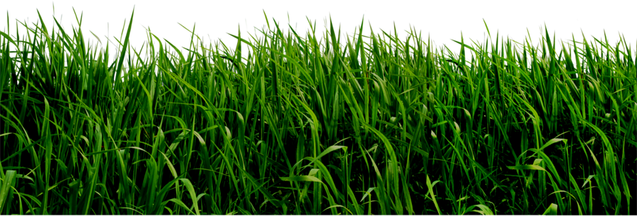 Realistic Grass Clip Art.