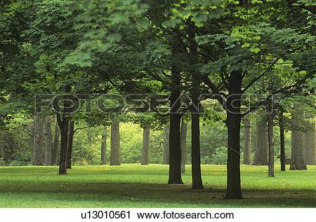 Stock Photography of Summer season, High Park, Toronto Ontario.