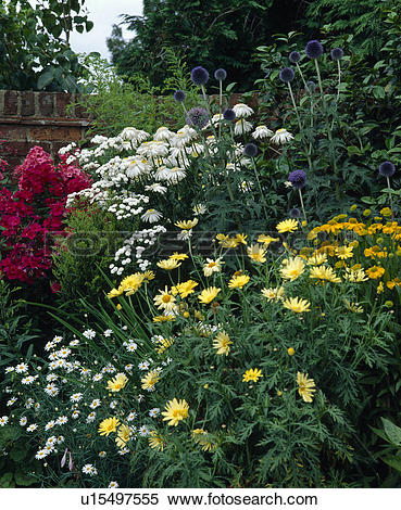 Stock Image of Corner of a summer perennial border with phlox.